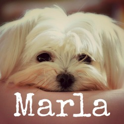 bfsc-staff-marla-small.jpg